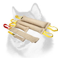 Buy Now Adult Siberian Husky Training Set and Get Amazing Gift ( value $15.29)