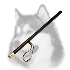Training Siberian Husky Stick for Schutzhund