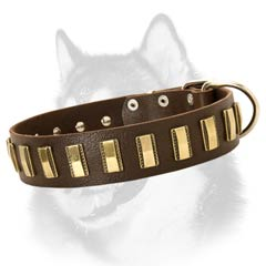 Adorned with plates leather collar
