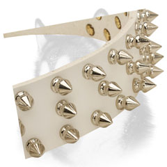 Nickel plated spikes of leather Siberian Husky collar