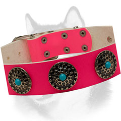 Conchos with Blue Stones of Pink Siberian Husky collar
