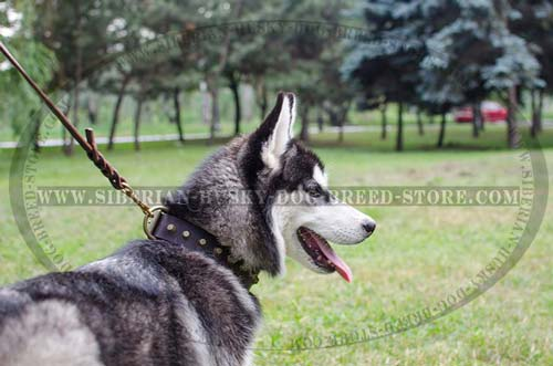 Decorated leather collar for Siberian Husky walking