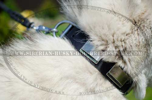 Designer dog collar carefully adorned