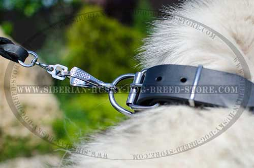 Designer dog collar with reliable fittings