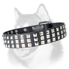Exclusive leather Siberian Husky collar