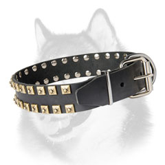 Handmade leather dog collar for Siberian Husky with nickel plated fittings