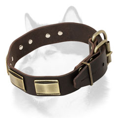 Sturdy leather dog collar for Siberian Husky