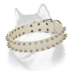 Spiked leather Siberian Husky collar