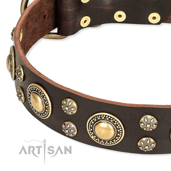 Leather dog collar with fashionable embellishments