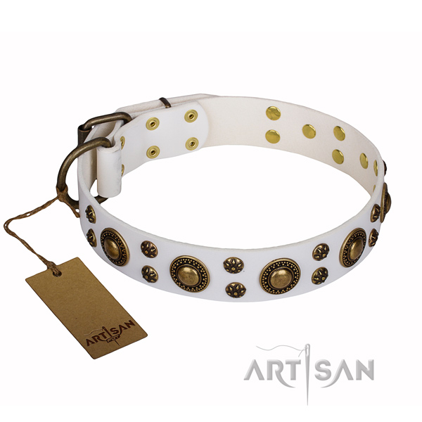 Walking full grain natural leather collar with adornments for your four-legged friend