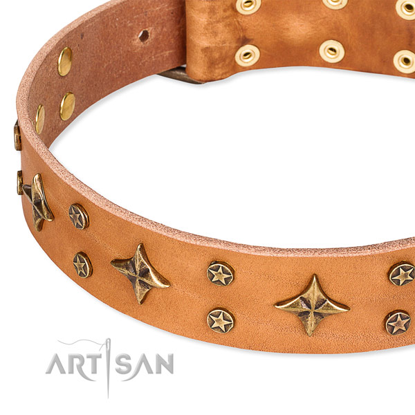 Full grain genuine leather dog collar with extraordinary studs
