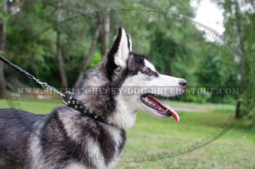 Fashion dog collar for Siberian Husky made of genuine leather
