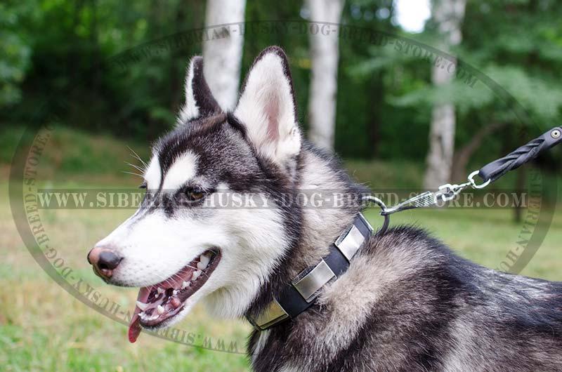 Designer Dog Collar For Siberian Husky Leather Custom
