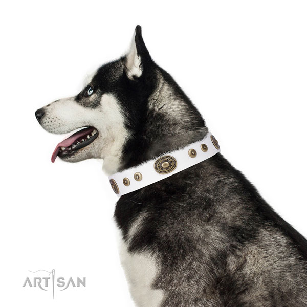 Impressive adorned genuine leather dog collar for everyday walking
