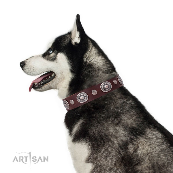 Strong buckle and D-ring on genuine leather dog collar for stylish walking