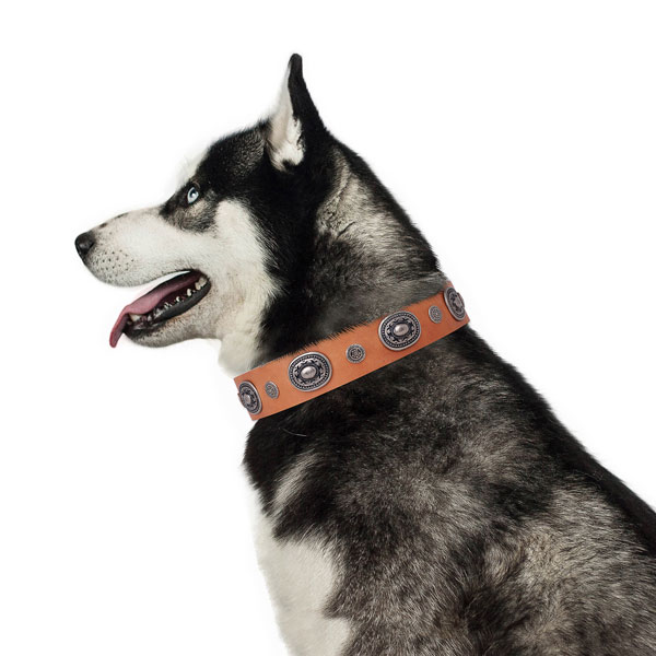 Genuine leather dog collar with durable buckle and D-ring for easy wearing