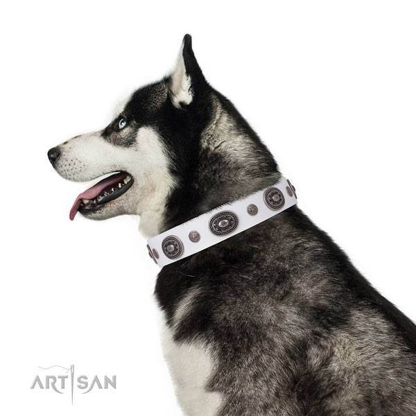 Genuine leather dog collar with corrosion proof buckle and D-ring for everyday walking