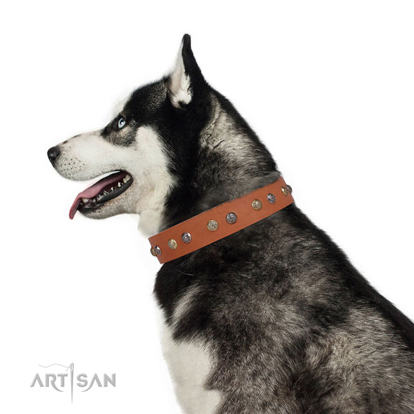 Full grain leather dog collar with corrosion resistant buckle and D-ring for everyday use