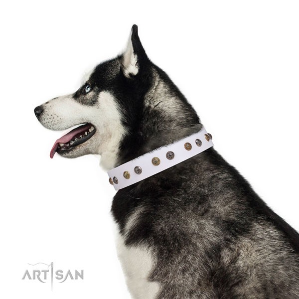 Daily use embellished dog collar made of reliable leather