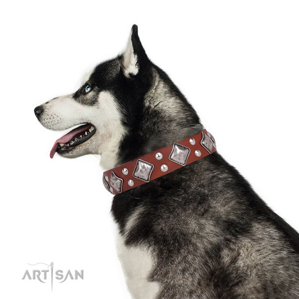 Daily use studded dog collar made of top rate leather