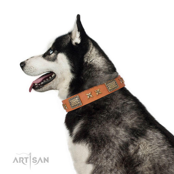 Everyday walking dog collar with awesome embellishments