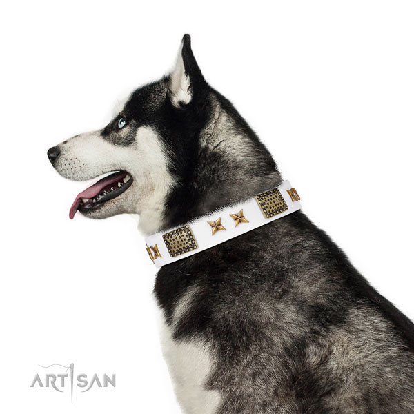 Exceptional studs on easy wearing full grain genuine leather dog collar