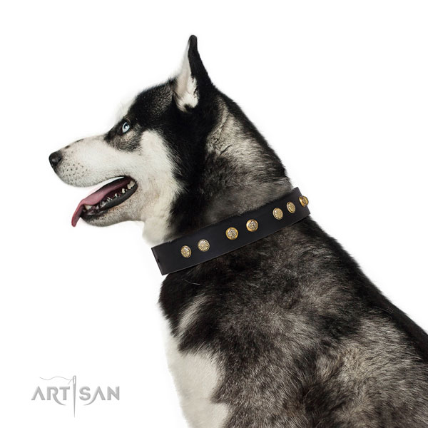 Unusual studs on daily use natural genuine leather dog collar