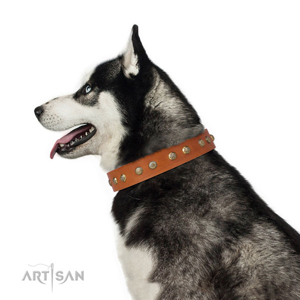 Extraordinary studs on comfy wearing natural genuine leather dog collar