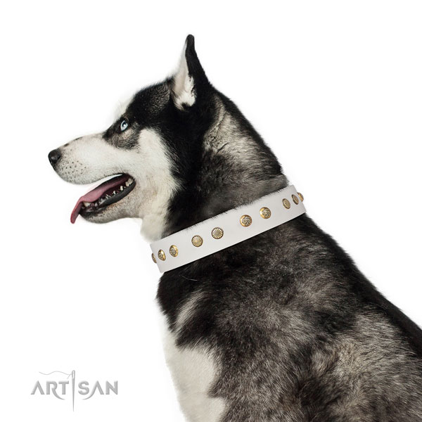 Incredible studs on daily use genuine leather dog collar