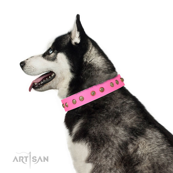 Fashionable adornments on basic training full grain leather dog collar