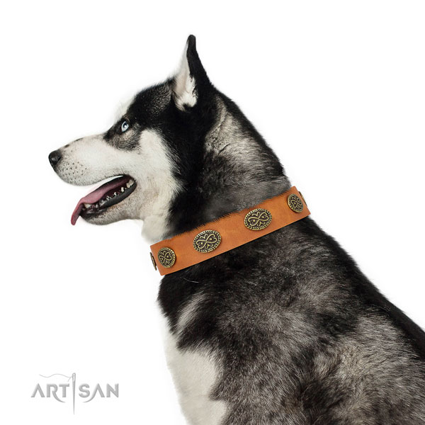 Trendy adornments on everyday use full grain leather dog collar