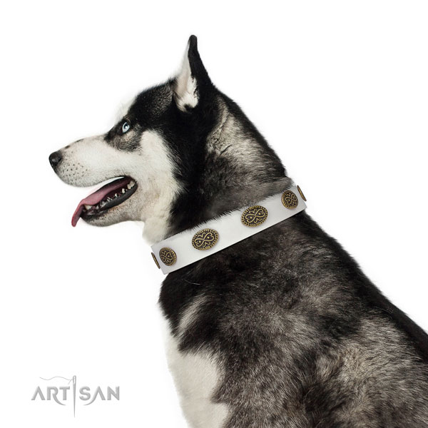 Unique studs on basic training full grain genuine leather dog collar