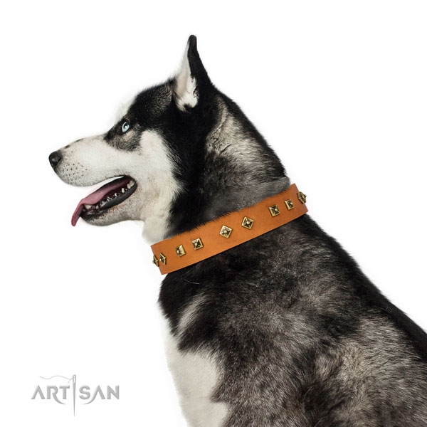 Top notch decorations on everyday use dog collar