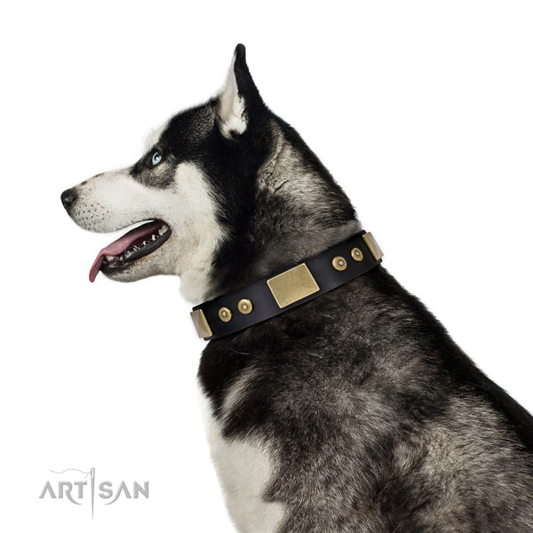 Strong daily use dog collar of natural leather