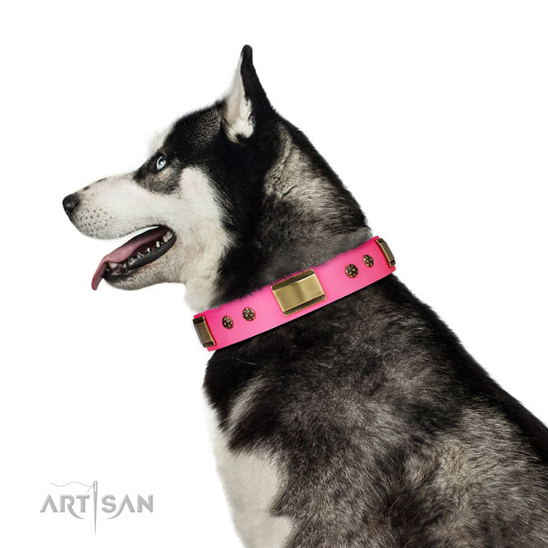 Basic training dog collar of natural leather with significant embellishments