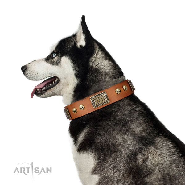 Rust-proof D-ring on full grain leather dog collar for everyday walking