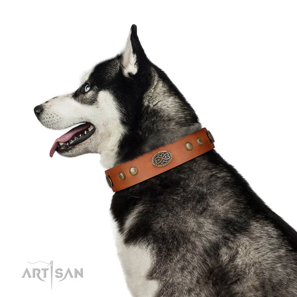Corrosion resistant hardware on full grain leather dog collar for daily use