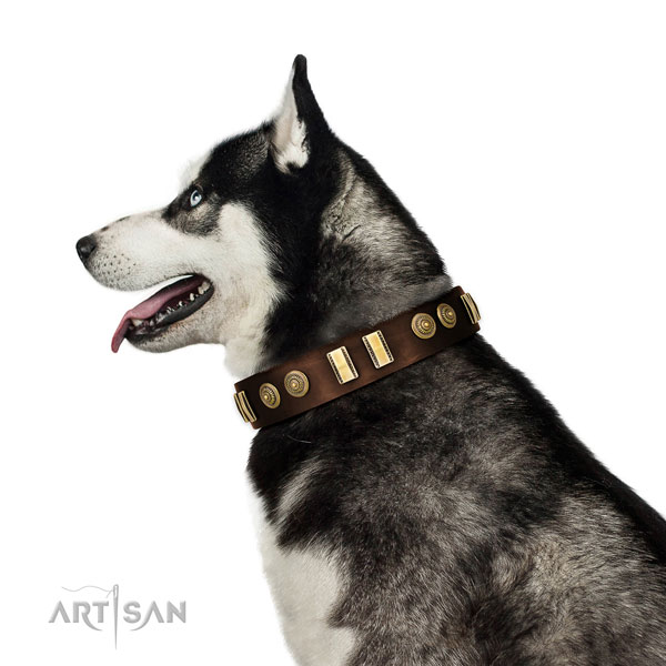Rust-proof buckle on leather dog collar for walking