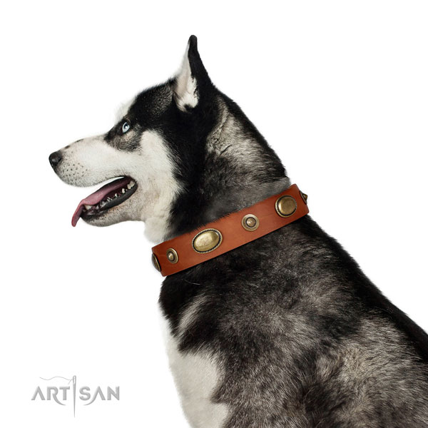 Walking dog collar of genuine leather with remarkable adornments