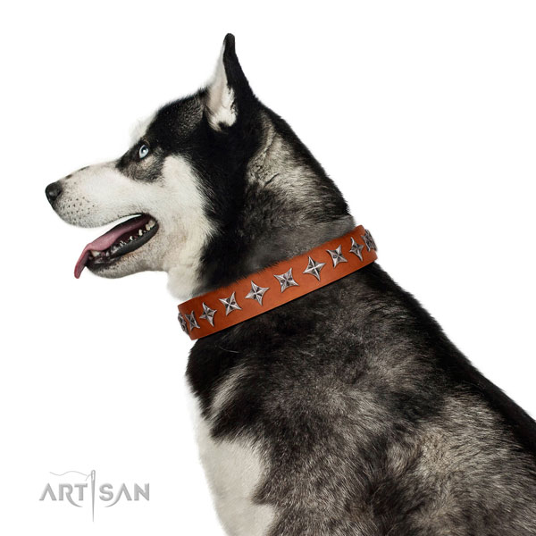 Top quality full grain natural leather dog collar with amazing adornments