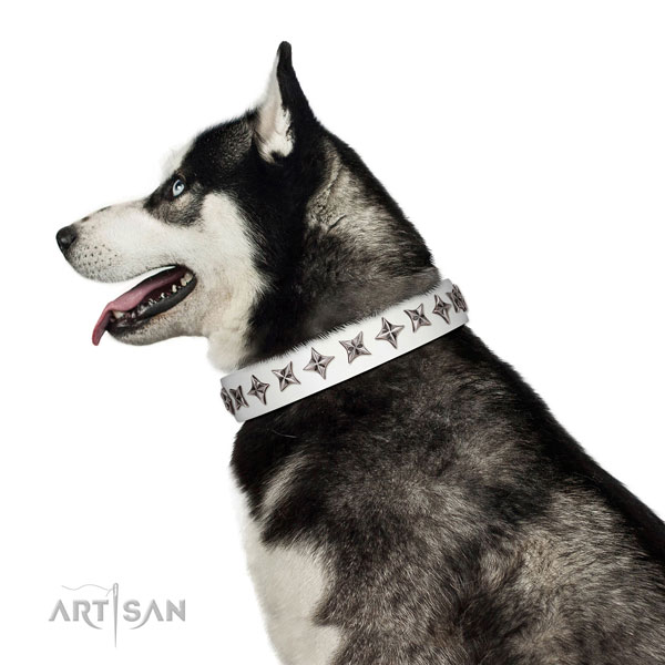 High quality full grain natural leather dog collar with incredible studs