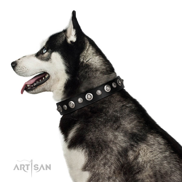 Quality full grain leather dog collar with exceptional embellishments