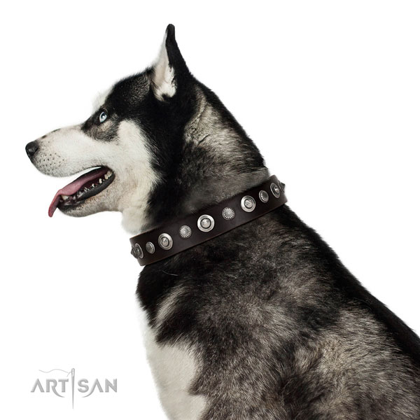 Reliable full grain natural leather dog collar with remarkable embellishments