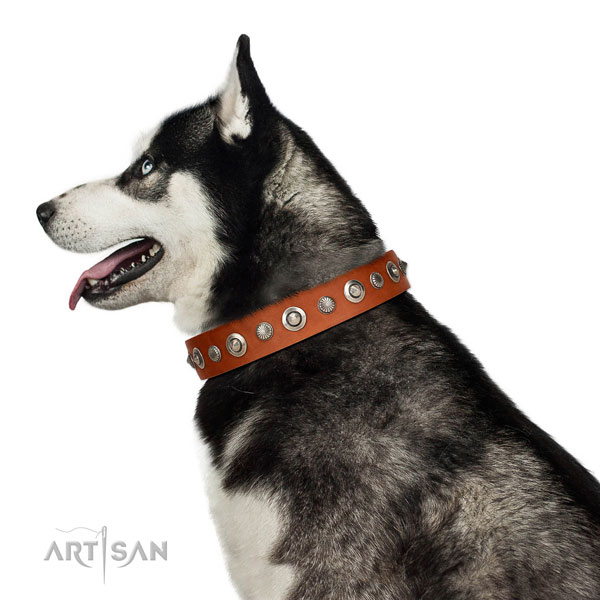 Fine quality natural leather dog collar with significant studs
