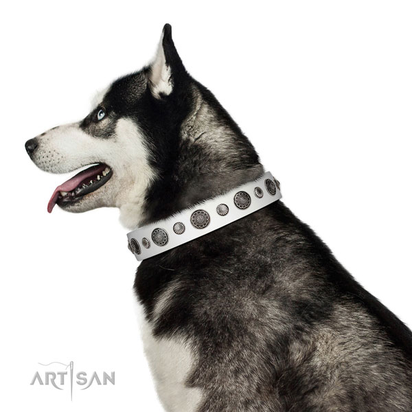 Incredible natural leather dog collar with rust-proof fittings