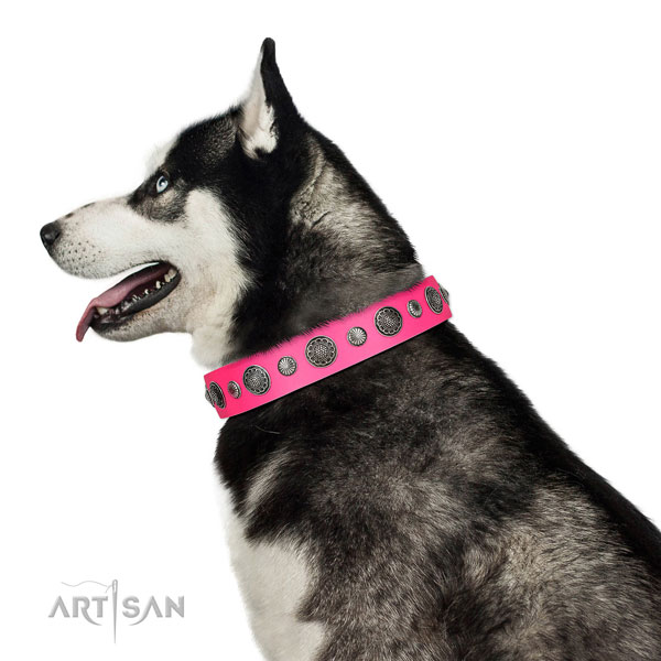 Embellished Full grain natural leather dog collar with corrosion proof fittings