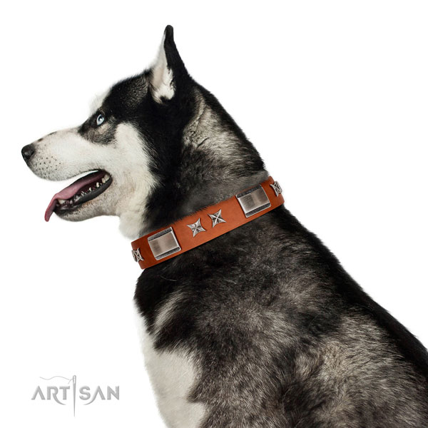 Fancy walking soft full grain leather dog collar with studs
