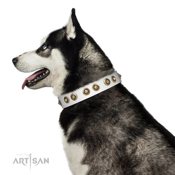 Everyday walking dog collar of genuine leather with trendy embellishments