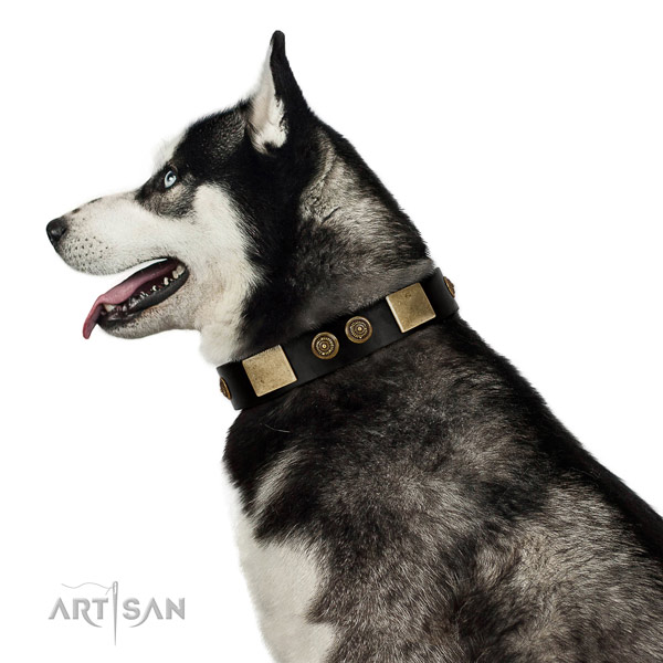 Everyday walking dog collar of genuine leather with stylish decorations