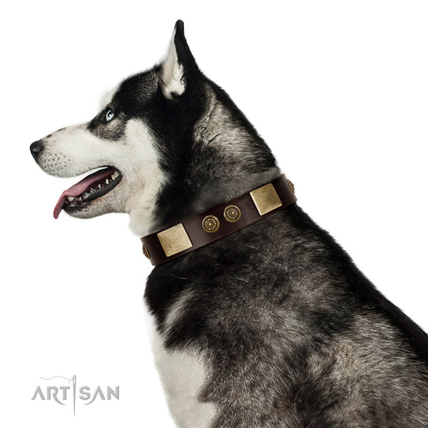 Comfortable wearing dog collar of natural leather with unique studs